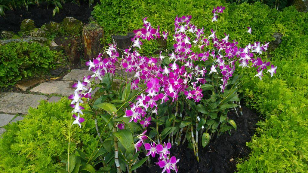 Jardín Nacional de Orquídeas